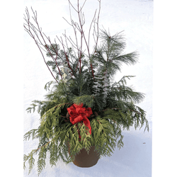 Evergreen Container
