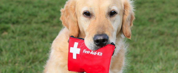 What To Include In Your Dog's First Aid Kit