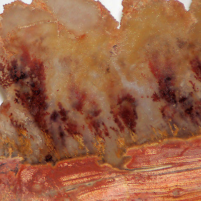 Carey Plume Agate 5.2 oz Lapidary Display collection slab - radiantrocksct