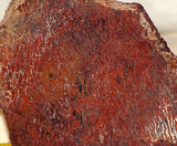Dinosaur Bone with Black Red White Cells lapidary slab 9 oz (255 grams)