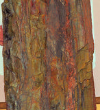 Arizona Nazilini Petrified Wood lapidary 60 lb rough