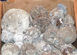 Flat Rate Box of Las Choyas Solid Coconut Geodes - radiantrocksct