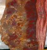 Carey Plume Agate Slab