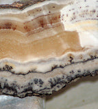 silver lace dendritic onyx 3.8 oz lapidary cabochon slab
