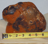 Amazon Valley Jasper  faced lapidary rough 6.9 lbs (3124 grams)