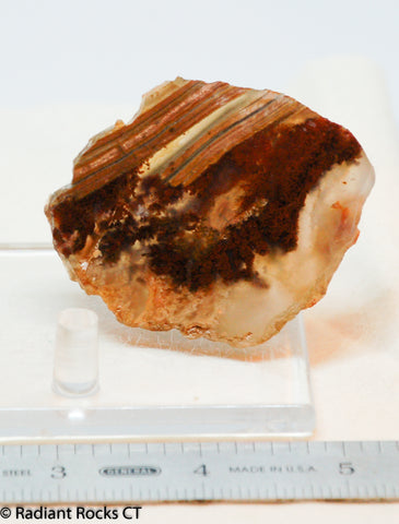 Carey Plume Agate  Lapidary  slab good plume 0.8 oz (25 grams)