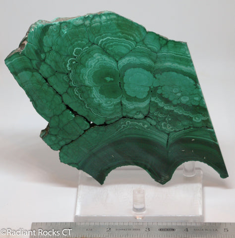 Chatoyant Congo Malachite lapidary slab 11.0 oz (310 grams)