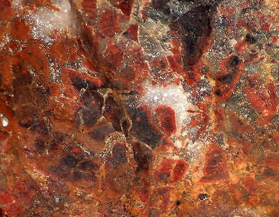 African Painted Valley Jasper Lapidary Rough red jasper/quartz/hematite 8.5lbs - radiantrocksct