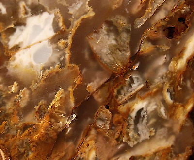 Northridge Plume Agate 3.4 oz face cut lapidary slab great plumes and agate - radiantrocksct