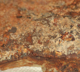 Northridge Plume Agate lapidary heel slab great plumes 10.8 oz (310 grams) - radiantrocksct