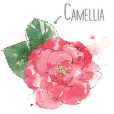 Camellia Natural Skincare Ingredient