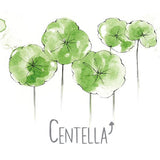 Centella Natural Skincare Ingredient