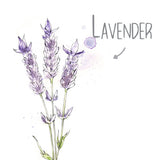 Lavender Natural Skincare Ingredient
