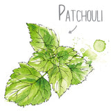 Patchouli Natural Skincare Ingredient