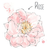 Rose Natural Skincare Ingredient