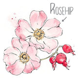 Rosehip Natural Skincare Ingredient