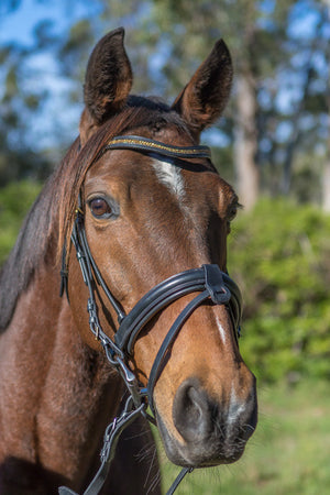 Beautiful, soft bridle Jazz