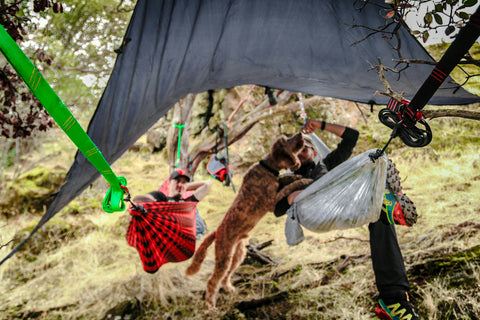 Hammocking under a rain fly with a dog