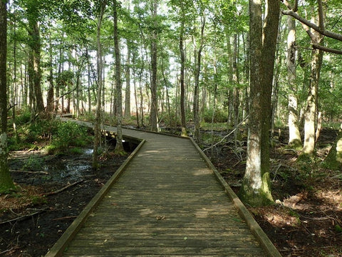 Walking bridge in the forest at Carolina Beach State Park, North Carolina