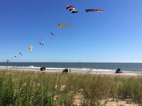 Kites being flown at Delaware Seashore State Park, Delaware