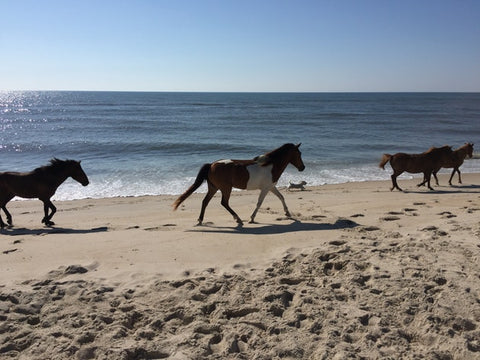 Horses on the beach at Assateague National Seashore, Maryland