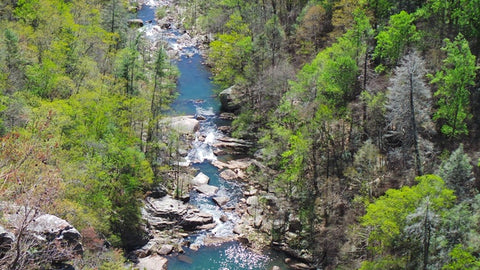 River surrounded by trees at Tallulah Gorge State Park, Georgia