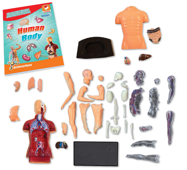 Human Body Science Kit content