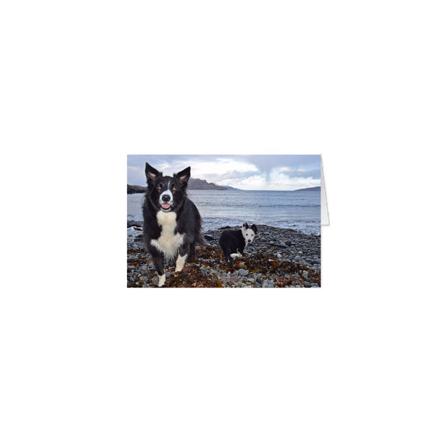 Collie Brothers: Blaze and Laoch A5 blank note cards - 10 with matching envelopes