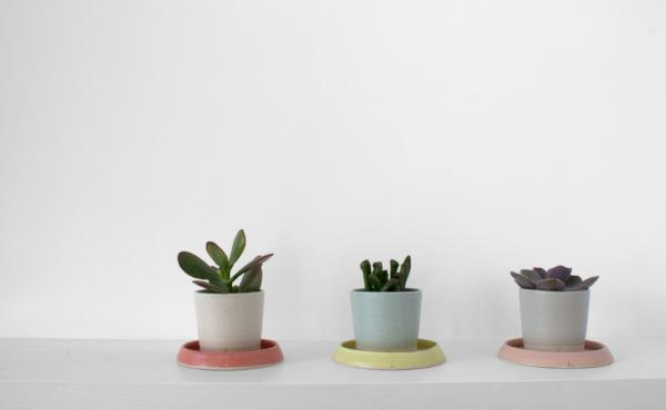 The Succulent Pot and Underplate (Small) - ARRAN STREET EAST