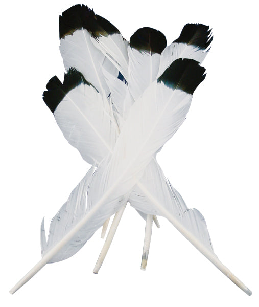 Simulated Eagle Feathers 4/Pkg-White W/Black Tip