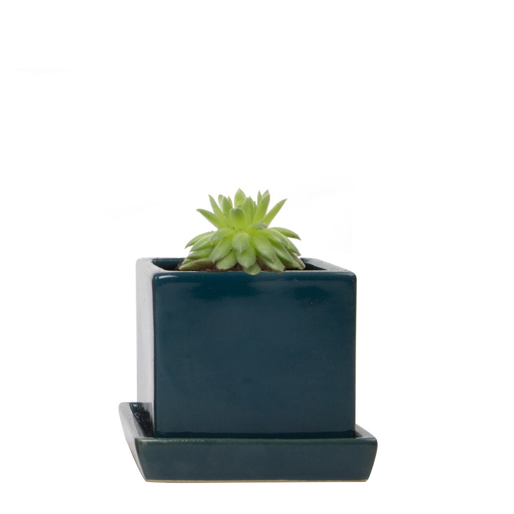 "CUBE PLANTER - 3"" - SEA BLUE"