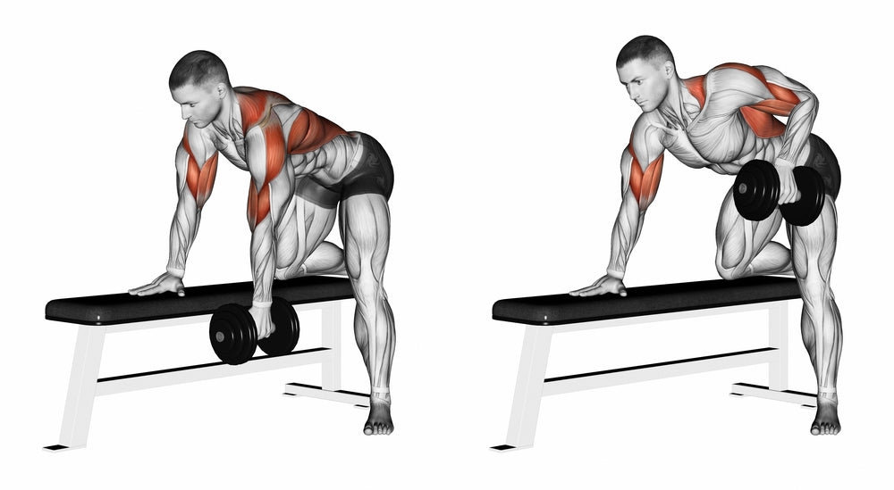 Bent-Over Dumbbell Row – KinX Learning