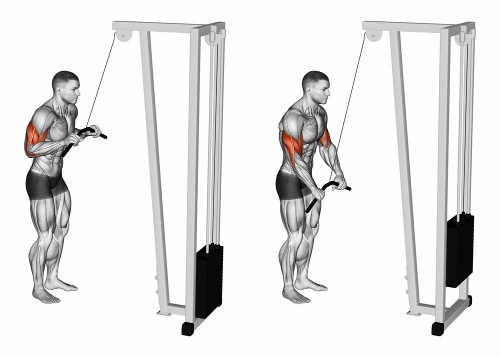 Image result for triceps pushdown