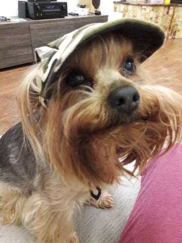 Dog Canvas  Baseball Cap With Ear Holes For Small  Dogs