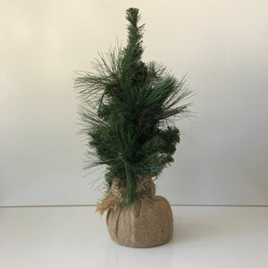 Christmas Tree - Small