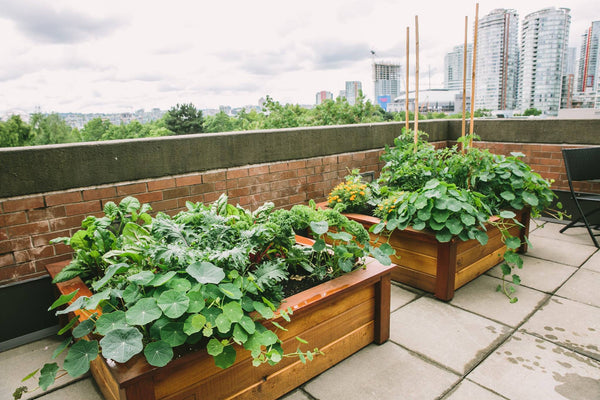 Self-Watering elevated rooftop garden. Cedar raised beds, container gardens, and veggie/vegetable gardens featuring GardenWell sub-irrigation to create wicking beds for growing your own food.
