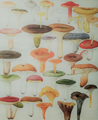 Cavallini French Mushrooms Chart Vintage Style Poster