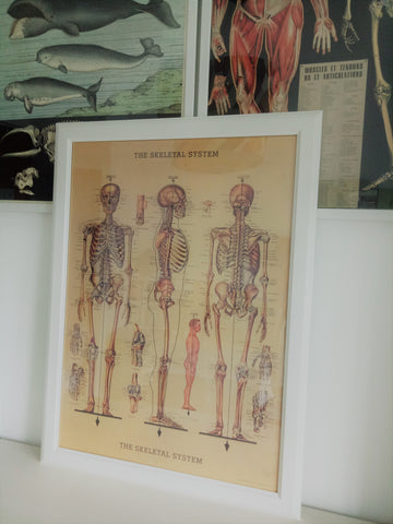 Cavallini IV The Skeletal System Poster