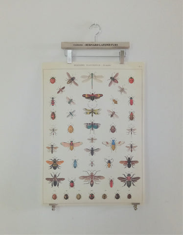 Cavallini VI Natural History Insects Poster