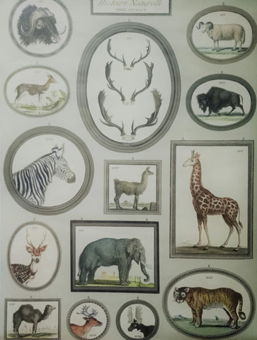 Cavallini Natural History Animals Poster