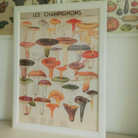 Cavallini II French Mushrooms Chart Vintage Style Poster