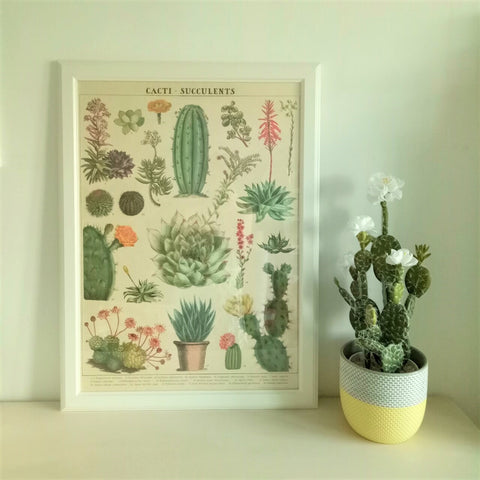 Cavallini V Cacti & Succulents Vintage Style Poster