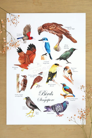 Birds of Singapore Poster (A3 Size)
