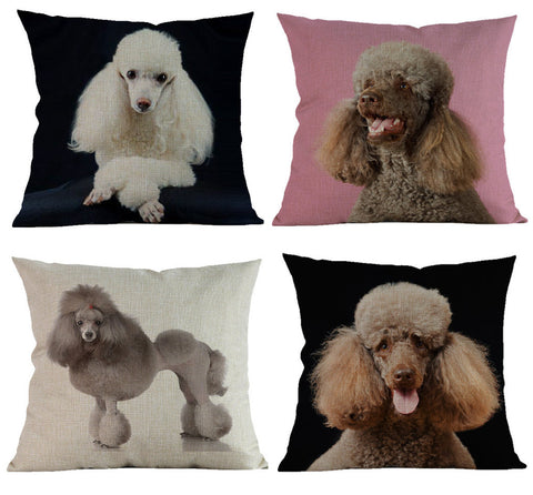 Beautiful Poodle Pillow case