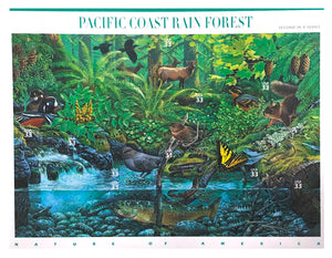 Nature of America: Pacific Coast Rain Forest