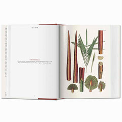 Martius. The Book of Palms - The Complete Plates