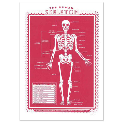 James Brown Human Skeleton print