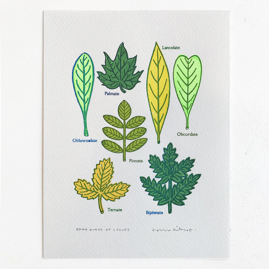 Some Kinds of Leaves Print