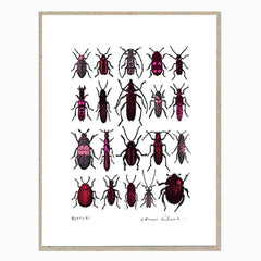 John Dilnot Red Beetles mini print