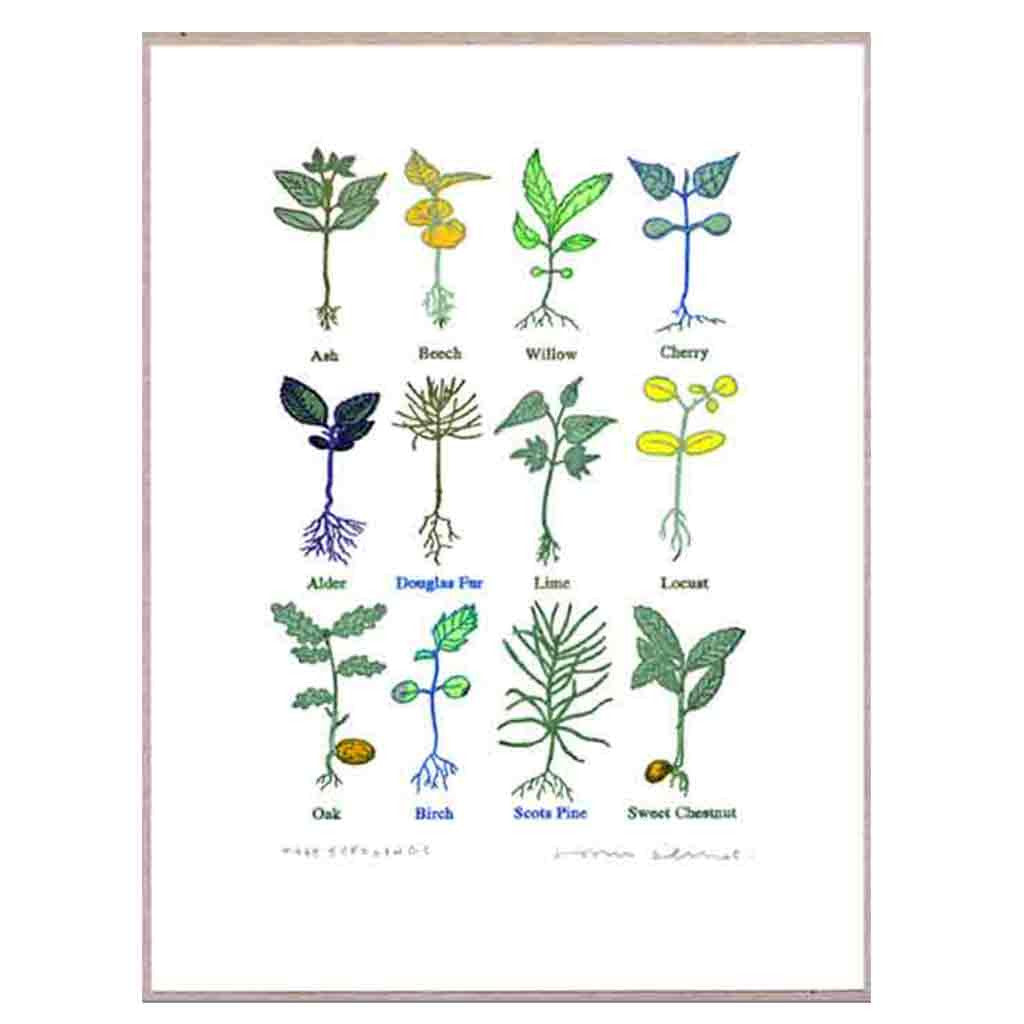 John Dilnot Tree Seedlings mini print